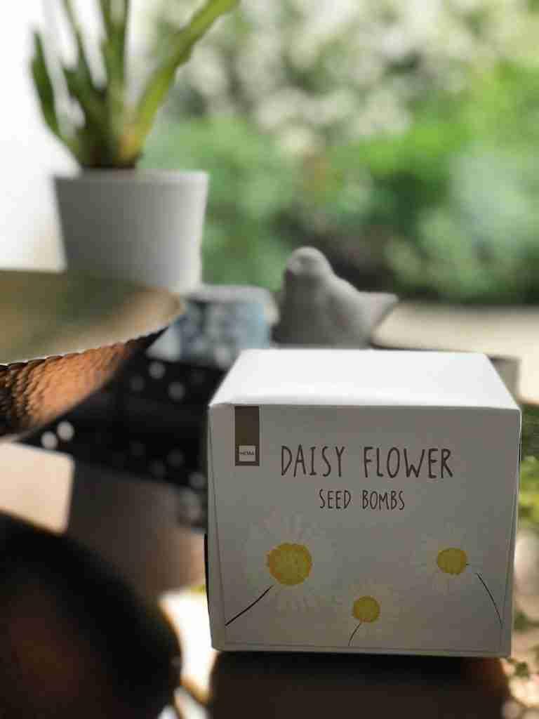 Roomy Home Hema shop edit Daisy Flower seeds